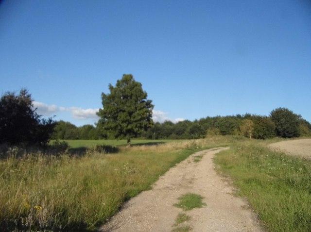 Track through a field near Tetsworth