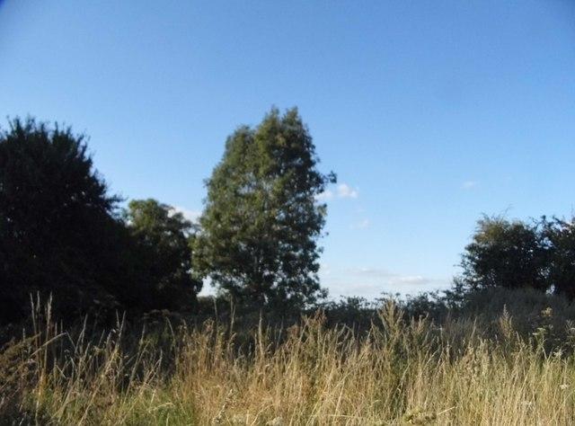 Woodland near Tetsworth