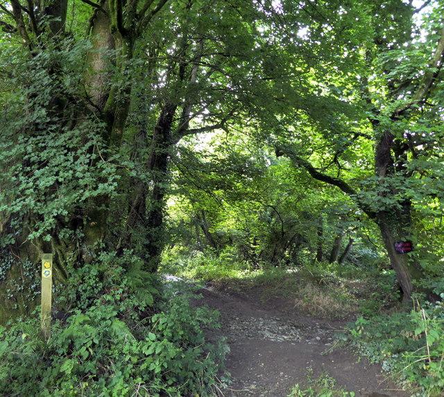 Bridleway near Llawhaden