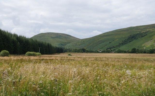 Rough Grassland Near Ettrick Marshes