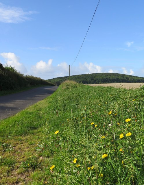 Dodpit's Lane, north-east of Shalcombe