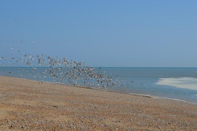 Flock of Birds, Dungeness