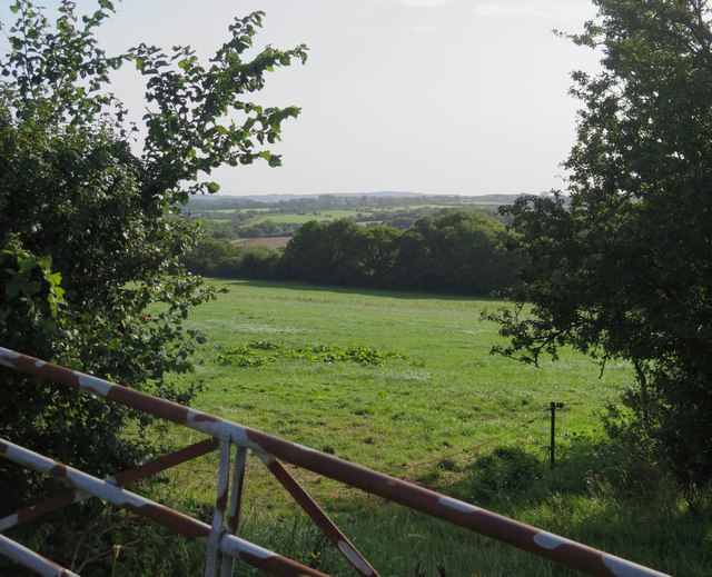 View towards Chessell Copse