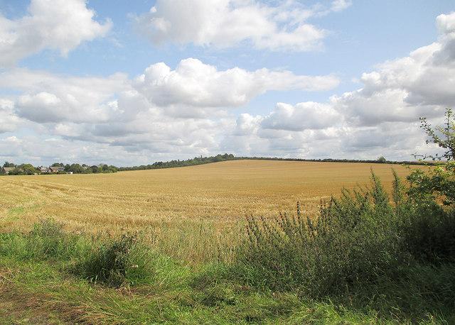 Barley stubble on Limekiln Hill