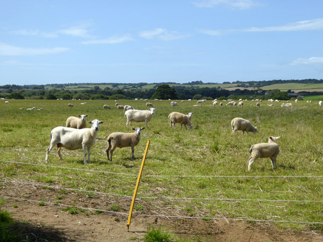 Sheep farming near Moor Farm