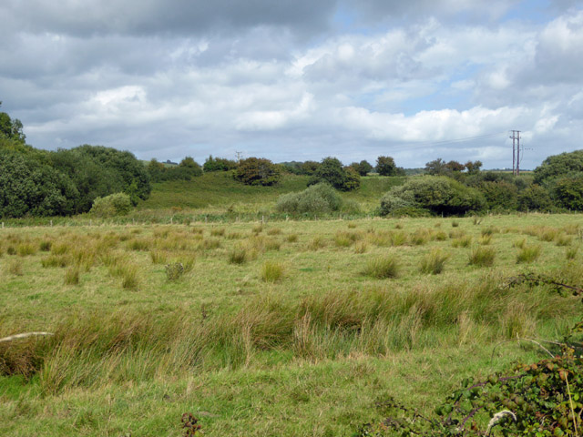Rushy meadow, Yar valley