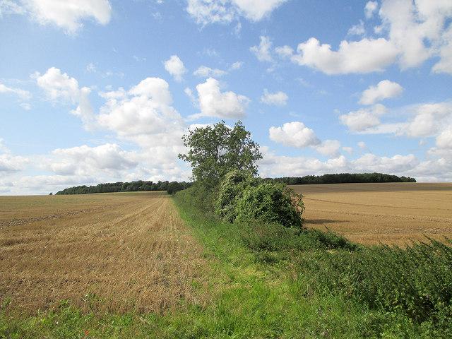 Towards Signal Hill