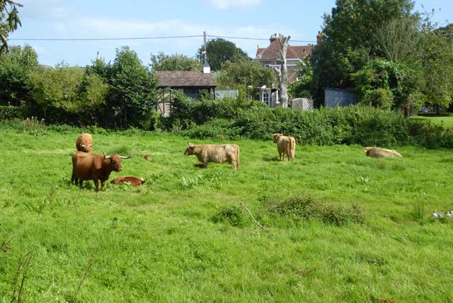 Cattle, Alverstone