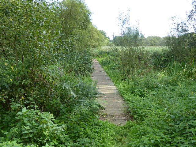Boardwalk, footpath towards Alverstone
