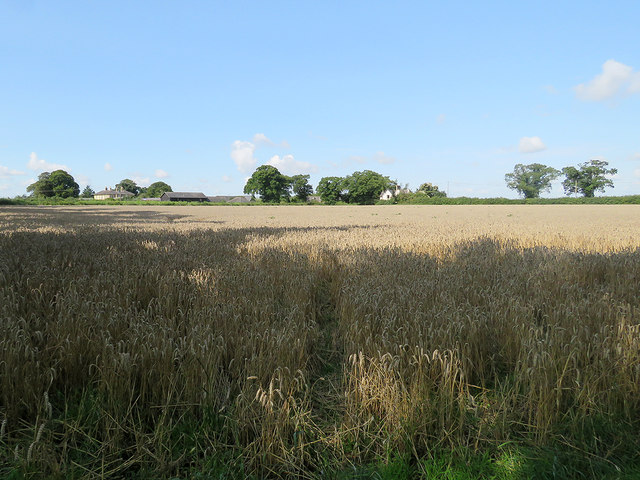 Babraham: wheatfield and Church Farm