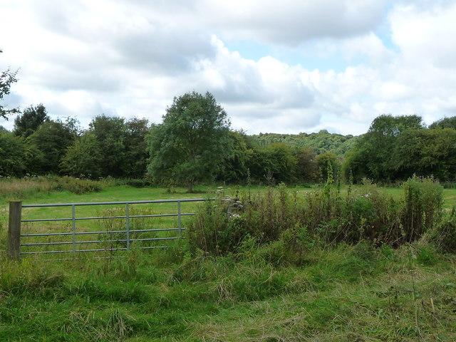 Small field on the edge of Pye Bridge