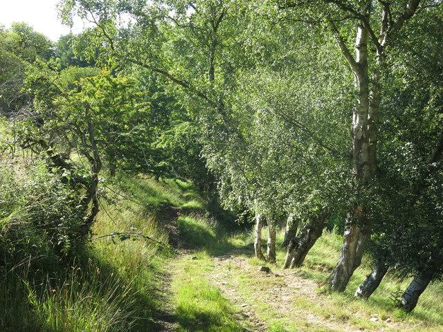 Farm track to a haugh by the Rowley Burn