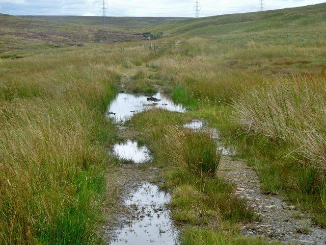 Shepherds' track off the Old Largs Road