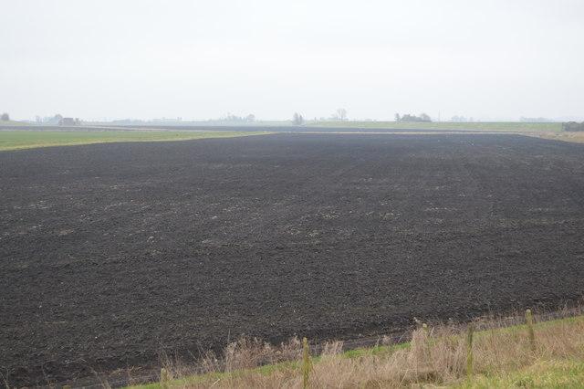 Black Fen Soil
