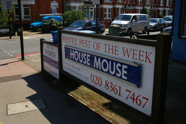 Pest of the Week, on Bowes Road