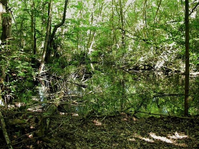 Pond deep in Dinglesden Wood