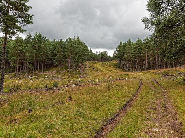 Farley Wood by valenta