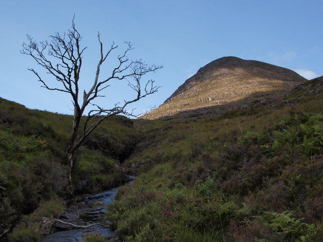 Burn and dead tree below Sgurr Dubh