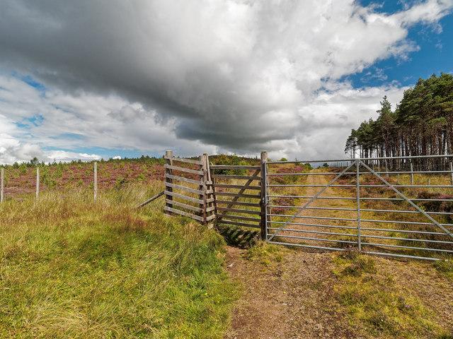 Edge of Farley Wood