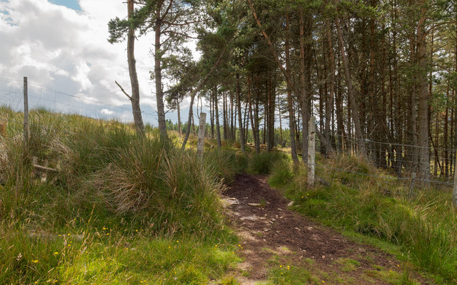 Farley Wood