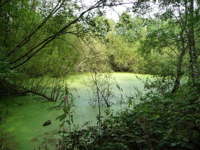 Pye Bridge Pond