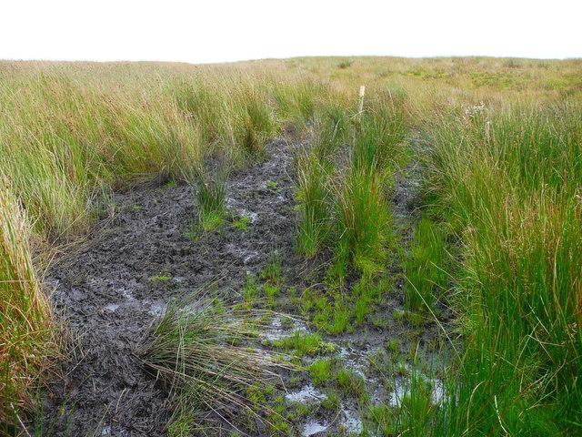 Waymark pole in a bog, Wadsworth
