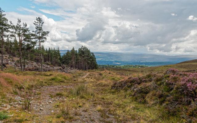 Track through Farley Wood
