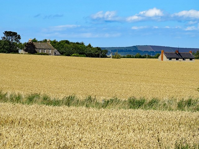 Awaiting harvest, Norham East Mains