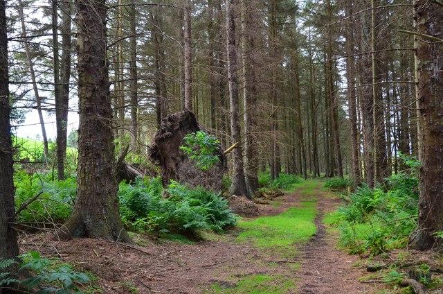 Path in Swiss Cabin Wood near Eddleston