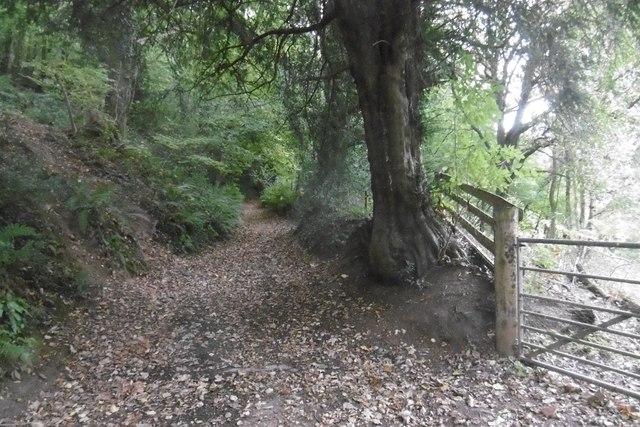 Wyesham Lane