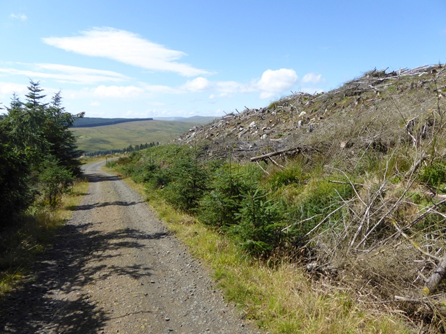 Forest road on the slopes of Deadwater Fell