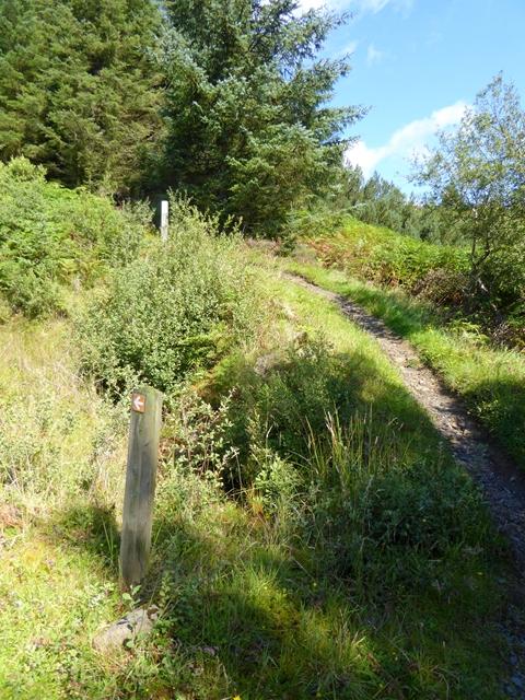 Downhill mountain bike trail at Jimmy's Hill