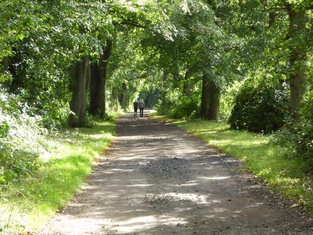 A couple walking in Chillington Park