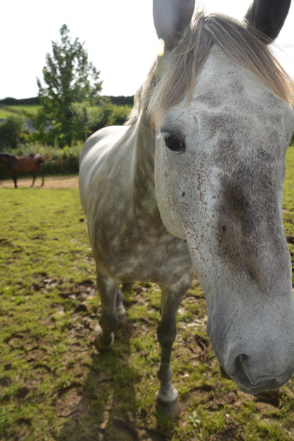 West Dorset : Grassy Field & Horses
