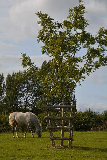West Dorset : Grassy Field & Horse