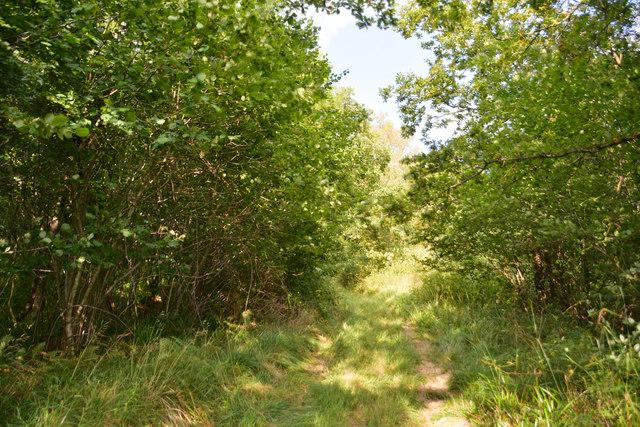 West Dorset : Woodland Track