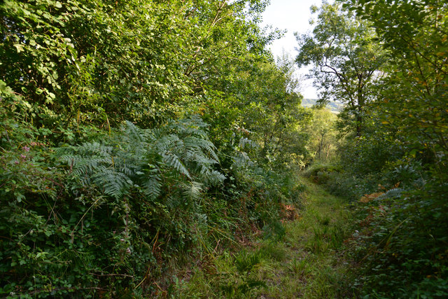 West Dorset : Woodland Track