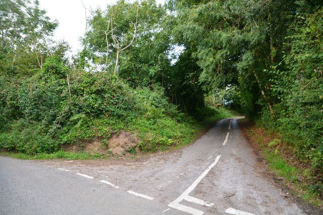 West Dorset : Country Lane