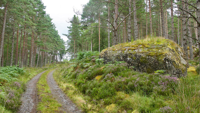 Large boulder beside the Strath Rusdale to Glen Calvie hill track