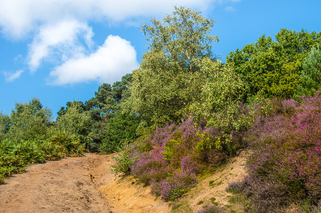 Path on St Martha's Hill