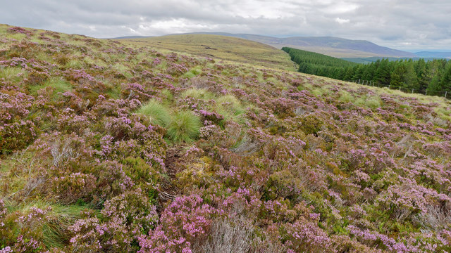 Heather and forestry and their dividing line