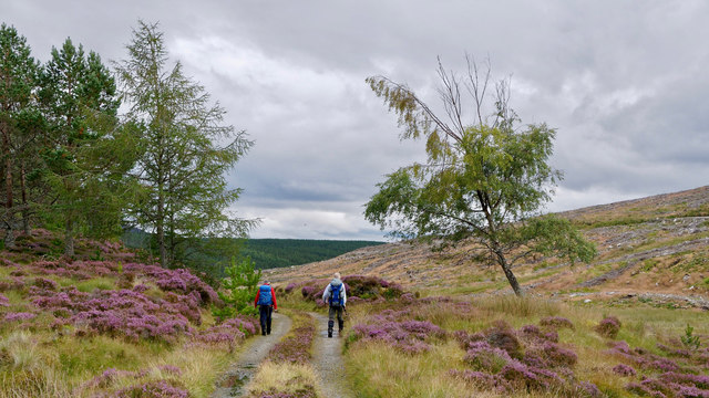 Walking the forest road towards Strath Rusdale