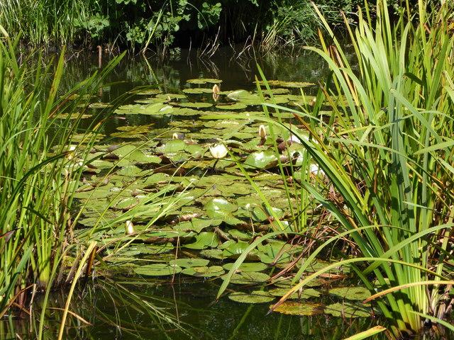 Horse Pond, Great Dixter