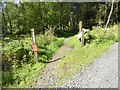 NY6394 : Mountain bike trail at Ravenshill by Oliver Dixon