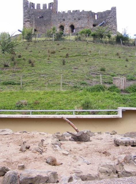 Meerkat Castle