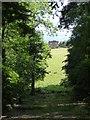 SJ8505 : The Whitehouse, Chillington Park by Philip Halling