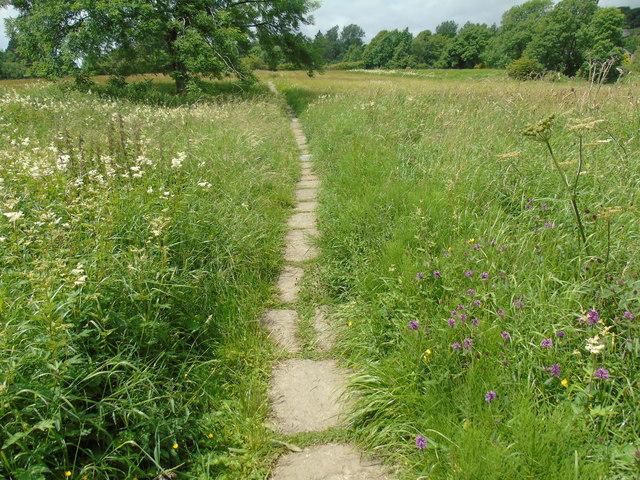 Meadows in flower (1)