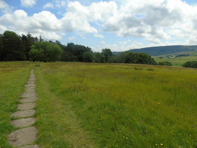 Meadows in flower (4)