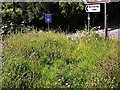 TQ7618 : Area of 'old' meadow at junction of A21 and Riccards Lane by Patrick Roper
