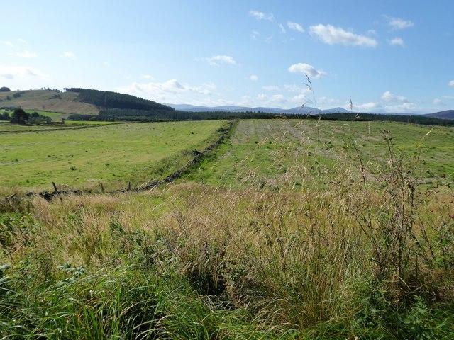 An interfield dyke at Coynach